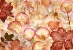 Mural Idealdecor Ref 00963