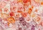 Mural Ref 00147 Flowers