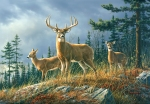 Mural Ref 00151 Autumn Whitetails
