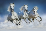 Mural Ref 00162 Arabian Horses