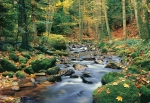 Mural Ref 00278 Forest Stream