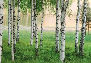 Mural Ref 00290 Nordic Forest
