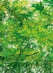 Mural Ref 00372 Bamboo
