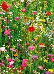 Mural Ref 00375 Flower Field