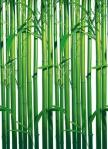 Mural Ref 00421 Bamboo