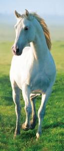 Mural de Porta Ref 00514 Cavalo Branco