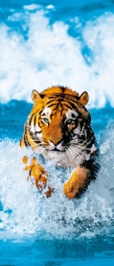 Mural de Porta Ref 00590 Tigre