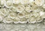 Mural Rosas brancas