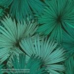 Papel de parede Jungle 5398