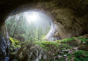 Mural ref 5078-4V-1_Cave-in-the-Forest