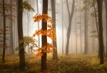 Mural ref 5153-4V-1_Foggy-Autumn-Forrest