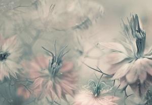 Mural ref 5355-4V-1_Nigella-Flowers