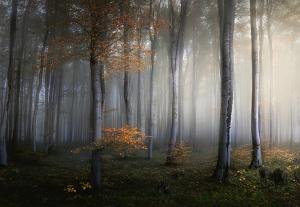 Mural ref 5357-4V-1_Foggy-Forest